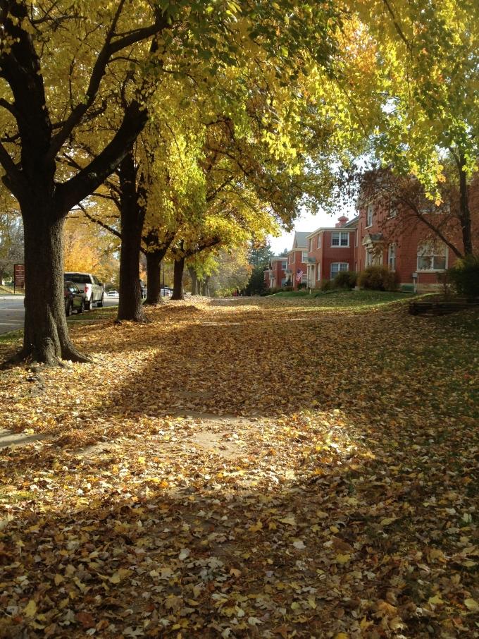 """""""The Path""""…isn't fall beautiful?"""